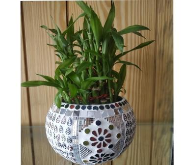 Lucky Bamboo (3 Tier) with designer Bowl